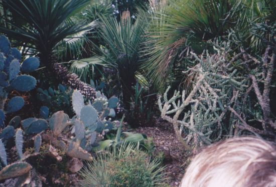 Cacti!