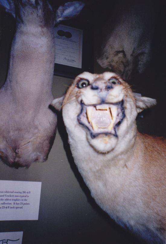 Cougar RAAAAAR.