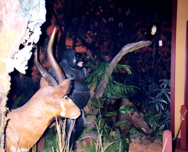 Deer Gorilla Warthog!