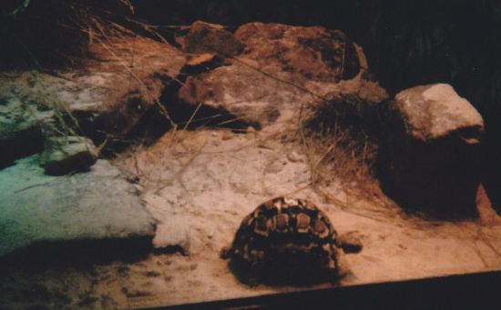 Nocturnal Turtle!