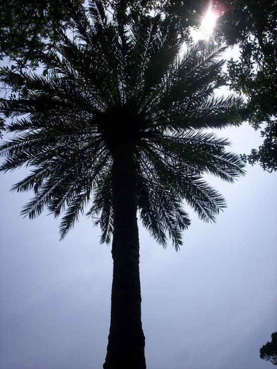 Palm Tree!