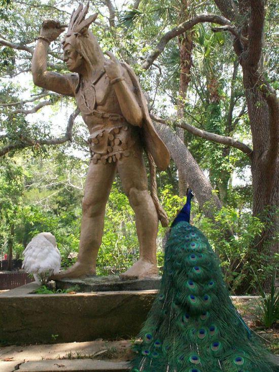 Peacock + Saturiwa!