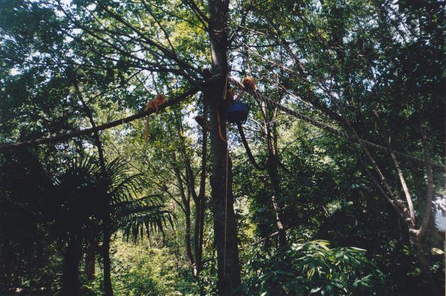 Tree Monkeys!