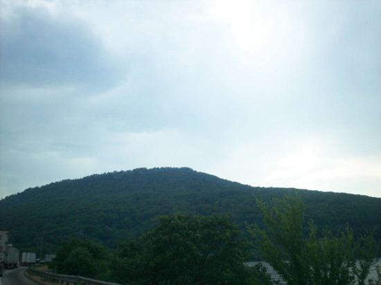 Appalachian Forest!
