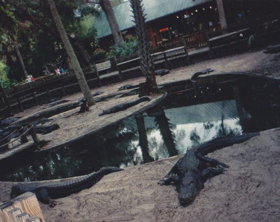 Bat Alligators!