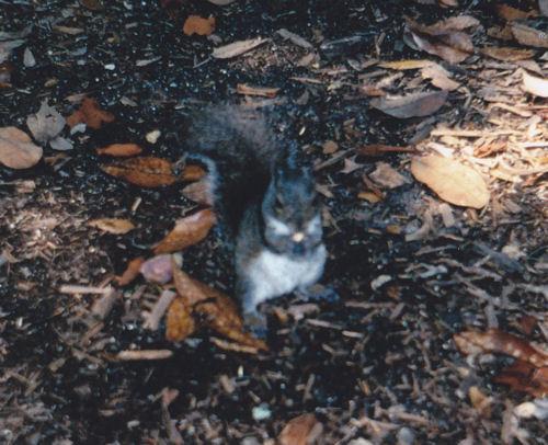Blurry Squirrel!