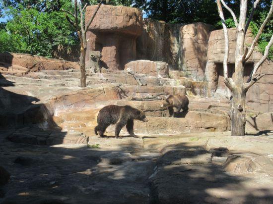 Bear Habitat!