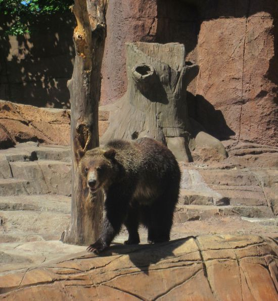 Bear + Stump!