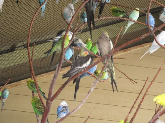 Budgie mess!