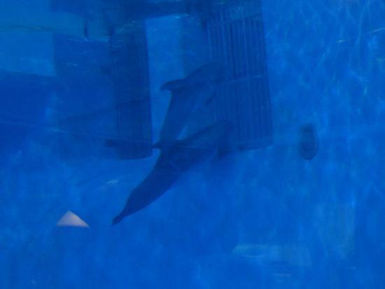 Dolphin Vent Peeking!