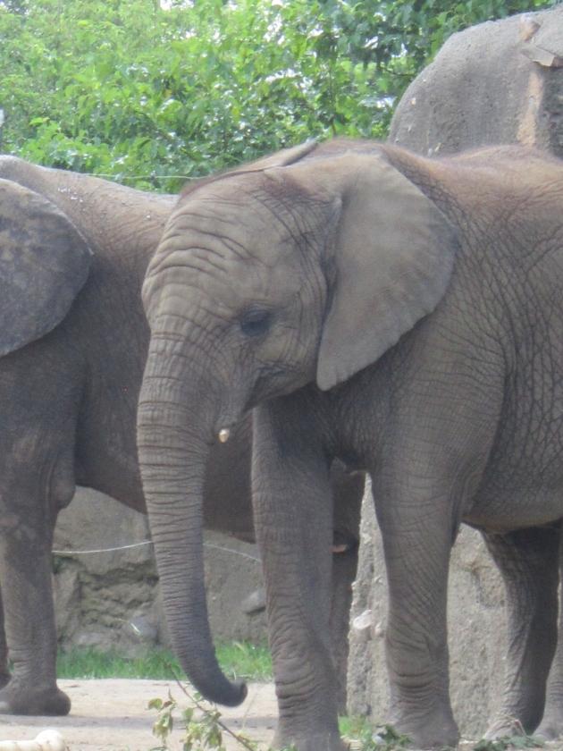 Elephant crowd!