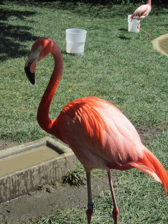 Flamingo diva!