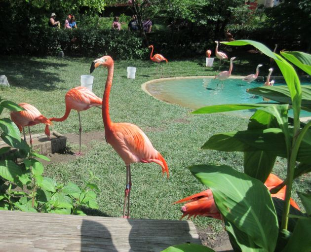 Flamingo Party!