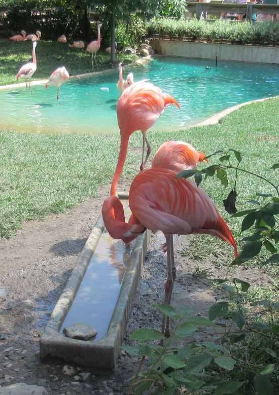 Flamingo Trough!