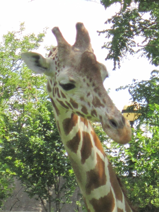 Giraffe Head!