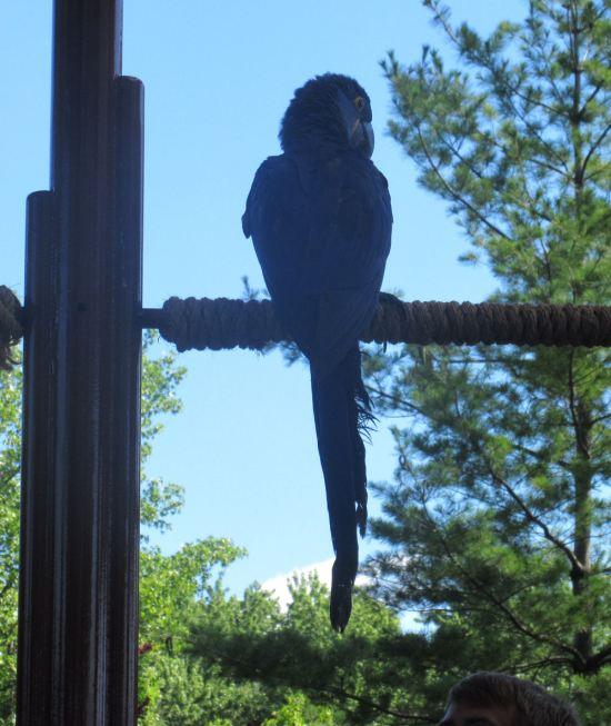 Macaw Back!