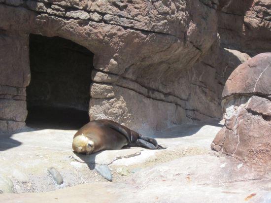Sea Lion in Repose!