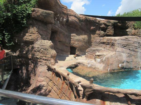 Sea Lion Lair!