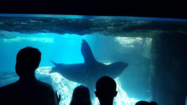 Sea Lion Waving!