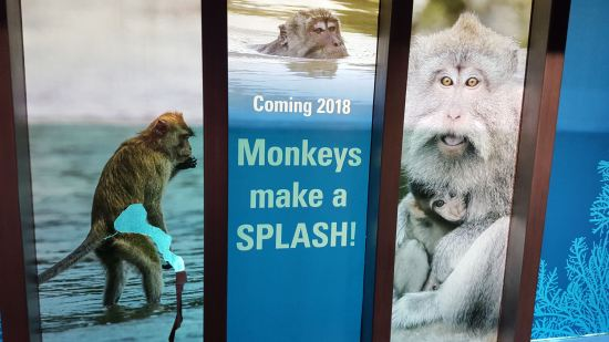 Splash Monkeys!