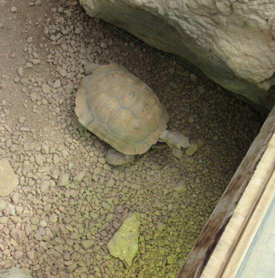Turtle + Gravel!
