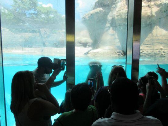 Walrus Crowd!