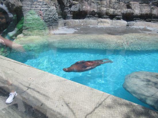 Walrus Home!