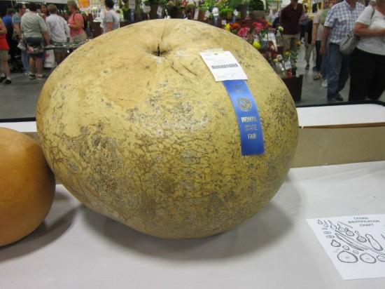 Giant Melon!