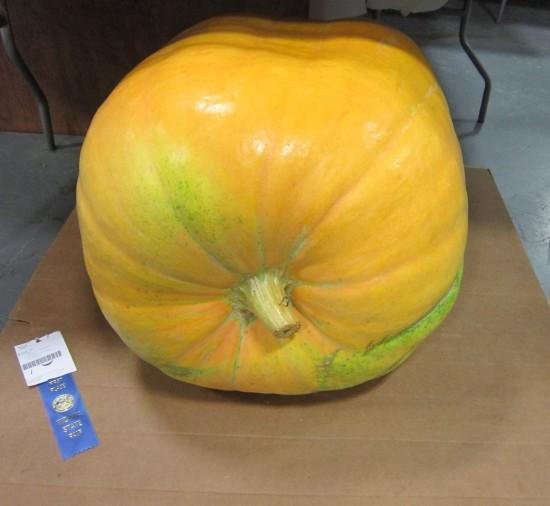Gianter Melon!