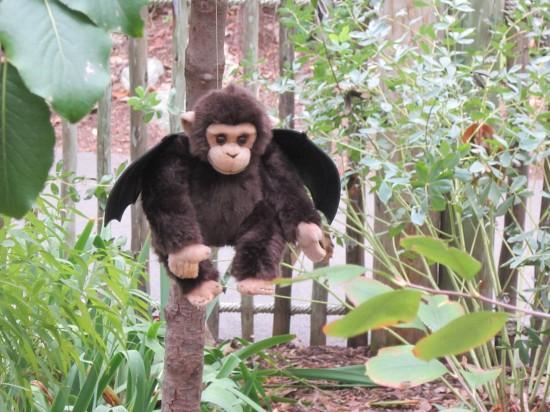 winged monkey!