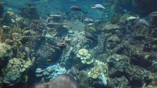 Aquarium 101!