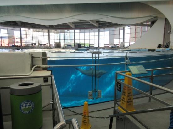 dolphin tank!