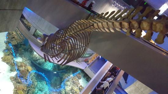 Fish Fossil!