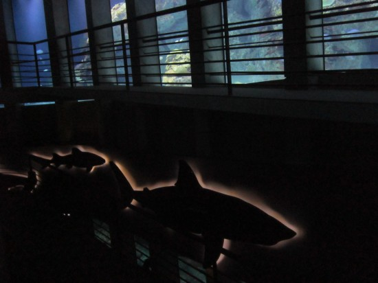 shark friezes!