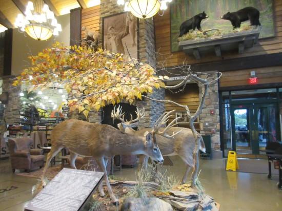 deer + bears!