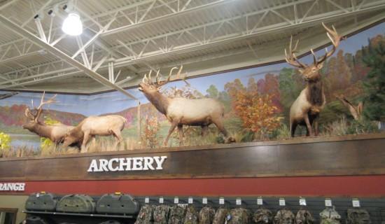 deer v archery!
