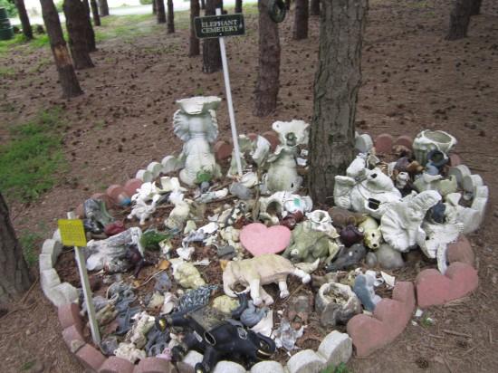 elephant cemetery!