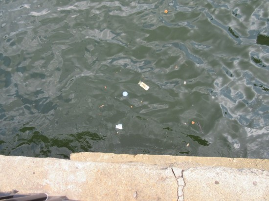Harbor Litter.