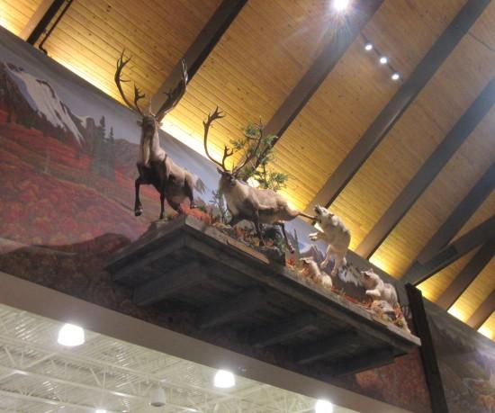 wolves v deer!