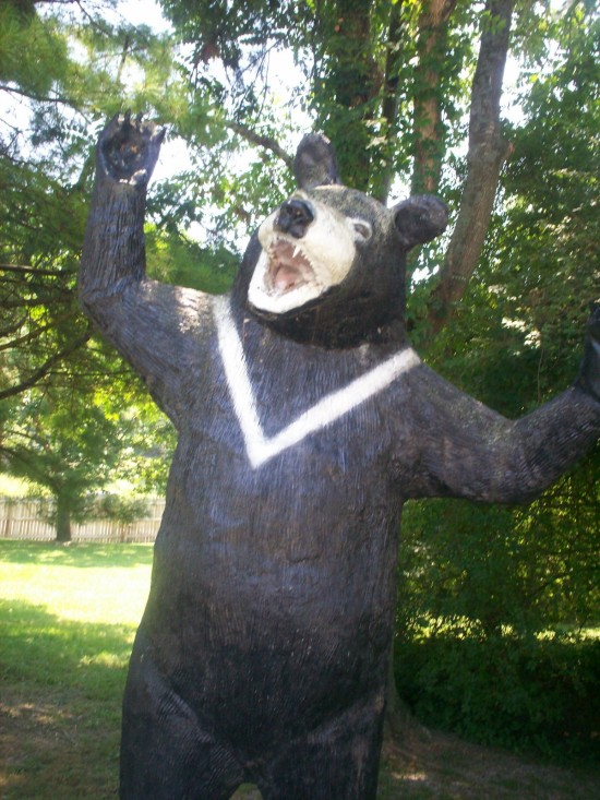 bear statue!
