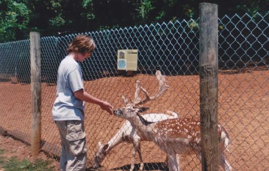 Deer Feeding!