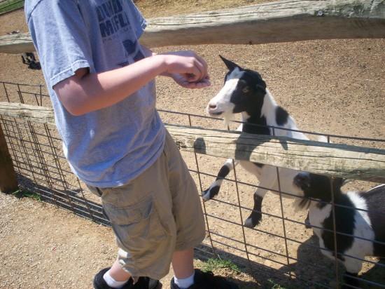 goat desperate!