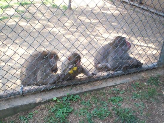 sad monkeys!