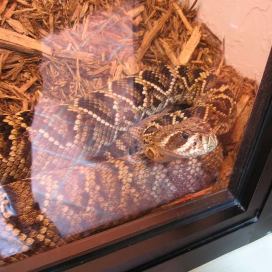Bad Snake!