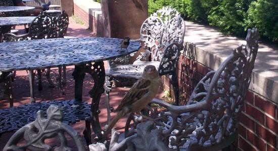 Bird on Table!