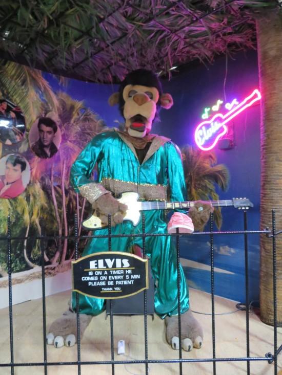 Elvis monkey!