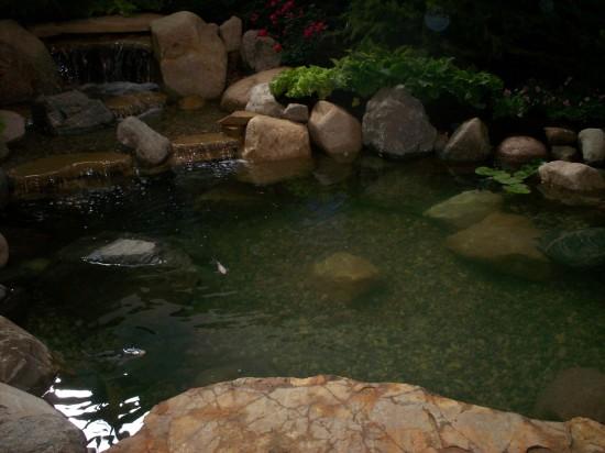 Pond!