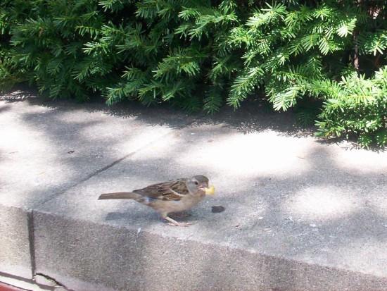 Liberty bird!