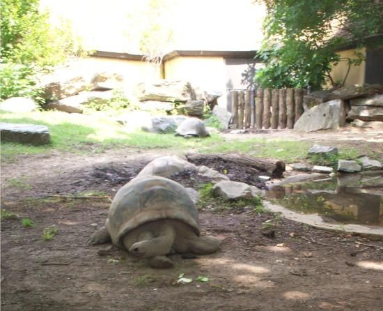 Tortoises!
