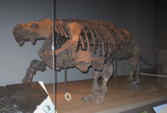 Pareiasaur!